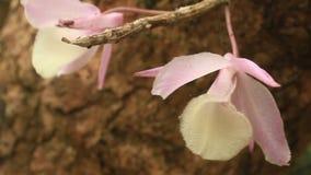 Fondo floral abstracto en estilo de la vendimia El viento de la orquídea soplaba suavemente almacen de video
