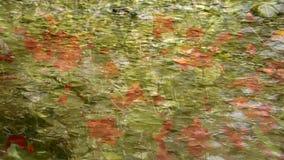 Fondo floral abstracto, tiro a través del agua clara metrajes
