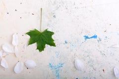 Fondo floral adornado y hoja verde Fotos de archivo