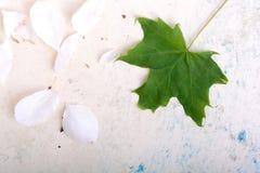 Fondo floral adornado y hoja verde Imagenes de archivo