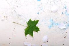 Fondo floral adornado y hoja verde Foto de archivo