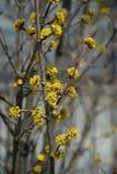 Fondo floral amarillo Imagenes de archivo