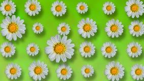Fondo floral animado del verano hermoso stock de ilustración