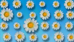 Fondo floral animado del verano hermoso ilustración del vector