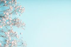 Fondo floral azul claro con las flores blancas del Gypsophila y espacio de la copia para su diseño fotos de archivo