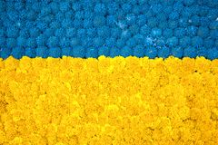 Fondo floral brillante hermoso hecho de maravilla amarilla, azul fotografía de archivo