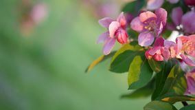 Fondo floral colorido de la primavera Imagenes de archivo