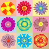 Fondo floral colorido vivo Imagen de archivo libre de regalías