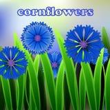 Fondo floral con el espacio para el aciano del azul de la plantilla del texto, de la tarjeta o de la invitación Vector Foto de archivo
