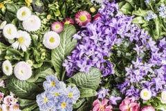 Fondo floral con las diversas flores del jardín Imagenes de archivo