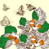 Fondo floral con las flores grabadas Foto de archivo libre de regalías