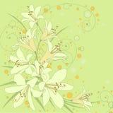 Fondo floral con los lirios Fotos de archivo libres de regalías