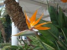 Fondo floral con una flor única anaranjada fotografía de archivo libre de regalías