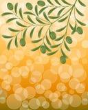 Fondo floral con una rama de olivo Fotografía de archivo libre de regalías