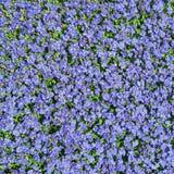 Fondo floral cuadrado con flores azules salvajes de la multiplicidad las pequeñas foto de archivo