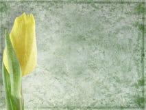 Fondo floral de Grunge Foto de archivo libre de regalías