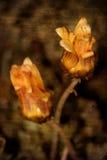 Fondo floral de Grunge Imagen de archivo libre de regalías