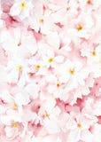 Fondo floral de la acuarela Imagenes de archivo