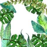 Fondo floral de la acuarela con las hojas tropicales ilustración del vector