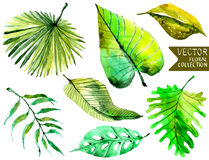 Fondo floral de la acuarela con las hojas tropicales para hermoso stock de ilustración
