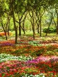 Fondo floral de la flor Garden fotografía de archivo