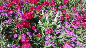 Fondo floral de la flor Garden metrajes