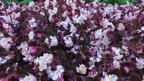 Fondo floral de la flor Garden almacen de metraje de vídeo