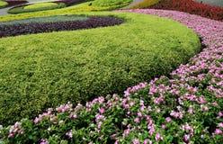 Fondo floral de la flor Garden imágenes de archivo libres de regalías
