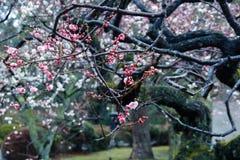 Fondo floral de la flor Garden Fotos de archivo