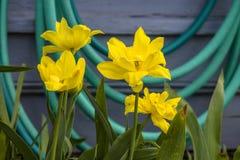 Fondo floral de la flor Garden Imagenes de archivo