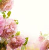 Fondo floral de la frontera de la rosa hermosa abstracta del rosa Fotografía de archivo libre de regalías