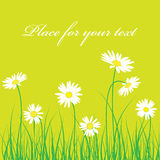 Fondo floral de la manzanilla linda Imagen de archivo libre de regalías