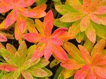 Fondo floral de la planta exótica Foto de archivo libre de regalías