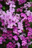 Fondo floral de las orquídeas Fotografía de archivo libre de regalías