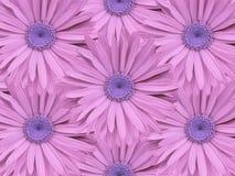 Fondo floral de manzanillas rosado-azules Primer Composición de la flor Foto de archivo