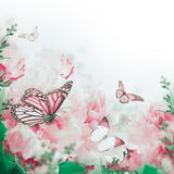 Fondo floral de rosas Imagen de archivo libre de regalías