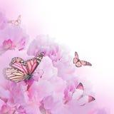 Fondo floral de rosas Fotos de archivo libres de regalías