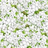 Fondo floral del esquema Fotografía de archivo