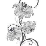 Fondo floral del mano-dibujo inconsútil con el lirio de la flor Ilustración del vector Foto de archivo