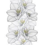 Fondo floral del mano-dibujo inconsútil con la amarilis de la flor Fotografía de archivo libre de regalías