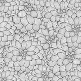 Fondo floral del mano-dibujo inconsútil monocromático con las dalias de la flor Fotografía de archivo