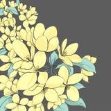 Fondo floral del manzano Fotografía de archivo