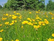 Fondo floral del paisaje del verano imagen de archivo libre de regalías
