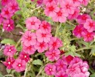 Fondo floral del paisaje del verano fotografía de archivo libre de regalías