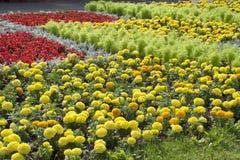 Fondo floral del paisaje del verano fotografía de archivo