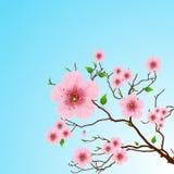 Fondo floral del resorte Imagen de archivo