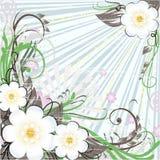 Fondo floral del resorte Fotos de archivo
