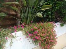 Fondo floral del verano fotografía de archivo