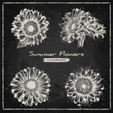 Fondo floral elegante, retro dibujada mano Fotos de archivo