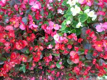 Fondo floral Flores hermosas, manojo de flores Imagen de archivo